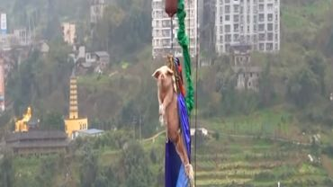 Chine: la vidéo d'un cochon forcé à faire un saut à l'élastique fait scandale