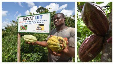 Plantation durable en Côte d'Ivoire en 2018 et fèves de cacao (image d'illustration)
