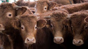 Greenpeace ne prend pas en considération les réalités de l'élevage de chez nous (FWA)