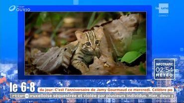 Le plus petit chat du monde...