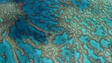 Grande barrière: de nombreux récifs risquent de mourir d'ici 20 ans