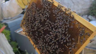 Les ruches du projet Bee Aware sur l'île de Malte.