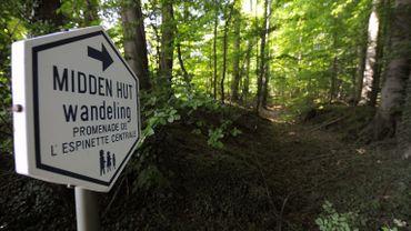 Ce lundi midi, les trois régions se sont formellement engagées à travailler ensemble pour sauver la forêt de Soignes