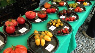 600 variétées de tomates présentées à Fouron Saint-Martin