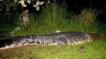 Le crocodile géant