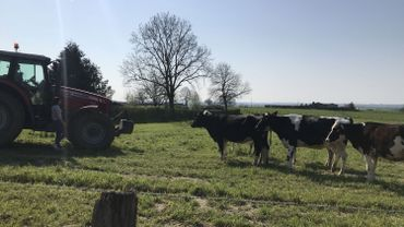 Dans les campagnes sprimontoises l'inquiétude monte quand le prix du lait baisse