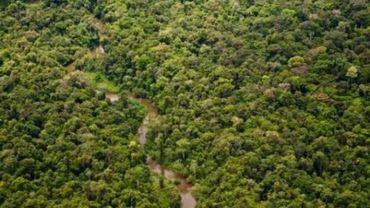 Les terres boisées continuent à régresser à l'échelle mondiale