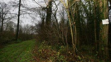 Le Bois d'Hasnon à proximité du projet de lotissement