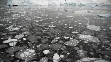 Les chercheurs tenteront de prédire jusqu'à quel point les changements environnementaux affecteront la manière dont fonctionnent ces écosystèmes.