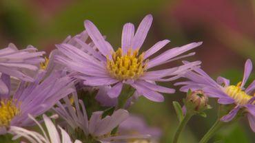 Quelques plantations à floraison tardive pour colorer l'arrière-saison au jardin