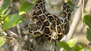 Pourquoi avons-nous peur des serpents ?
