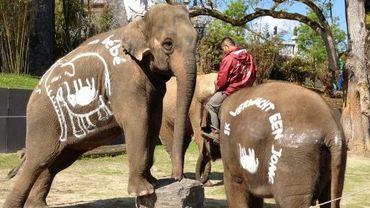 Ani et Sandri, les deux éléphantes enceintes