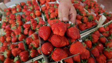 La première criée aux fraises de Wépion aura lieu cette semaine, plus précisément jeudi soir.