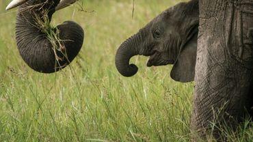 Un éléphanteau photographié le 24 janvier 2018 dans le sud du Kenya