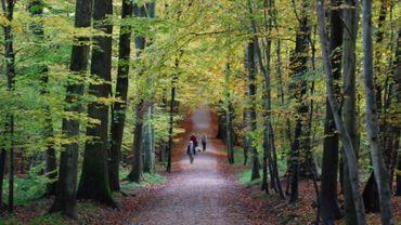 La Forêt de Soignes se trouve à cheval sur les trois régions du pays... Ce n'est donc pas simple à gérer.
