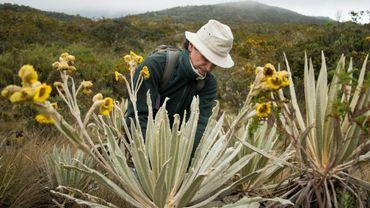 Le botaniste colombien Julio Betancur recueille des plantes près du parc national Chingaza, au nord-est de  Bogota
