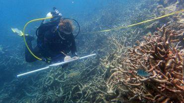 Les coraux continuent de mourir dans la Grande barrière australienne
