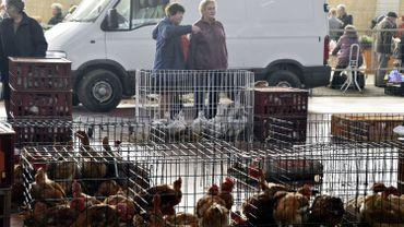 Fin des mesures de confinement des volailles pour les professionnels également.