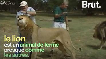 """En Afrique, des chasseurs tuent pour un """"trophée"""""""