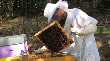 La production de miel varie beaucoup entre les régions cette année