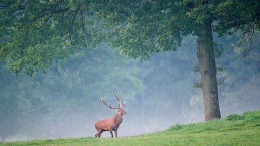 Un cerf dans la forêt de Freyr