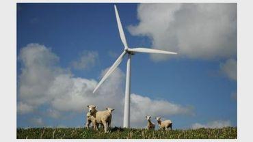 Des moutons sous une éolienne en Nouvelle-Zélande