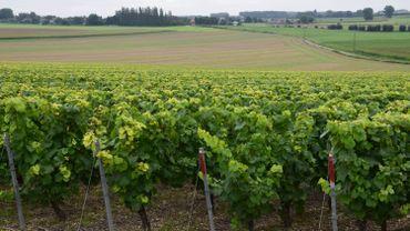 Le vignoble des Agaises à Haulchin