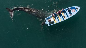 Au Mexique, observer les baleines pour oublier la pandémie