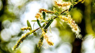 """Le réchauffement climatique va conduire à """"une augmentation des quantités de pollen"""" à l'origine de gênes ou d'allergies respiratoires, avertissent trois réseaux de suivi dans leur bilan annuel publié mardi."""