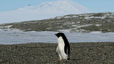 Des milliers de poussins de manchots Adélie sont morts de faim dans l'Antarctique en raison de l'étendue inhabituelle de la banquise qui a contraint les parents à aller plus loin chercher leur nourriture, ont déclaré vendredi des chercheurs.