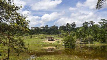 Brésil: Bolsonaro confie les terres indigènes au ministère de l'Agriculture