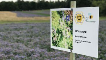 Cultiver des fleurs pour ramener des insectes dans les champs, c'est l'un des objectifs de l'expérience menée par Nature et Progrès.