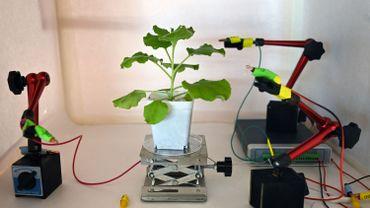 Des plantes carnivores manipulées à distance ou des végétaux qui signalent quand ils sont atteints par une maladie.