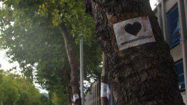 Selon une firme spécialisée, quelques 59 arbres de l'avenue du Port sont dangereux et devraient être abattus.