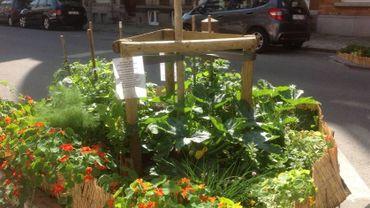 Jardiner en plein centre de Liège, c'est désormais possible!