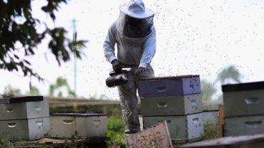 Un rapport dénonce le lobbying effréné d'entreprises contre l'interdiction de pesticides dangereux pour les abeilles