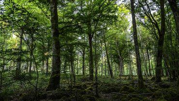 Le parc, dont l'idée était née lors du Grenelle de l'environnement en 2007, est le premier consacré aux forêts en France.