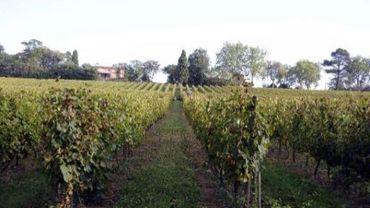 30 ares de vignes vendangées à l'insu de leurs propriétaire