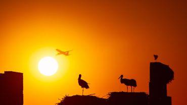 Coronavirus : le Maroc suspend ses vols à destination et en provenance de Belgique à partir de mardi
