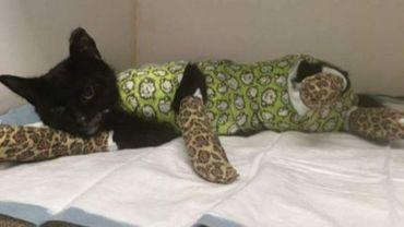 14.000 euros récoltés sur internet pour Sprotje, un chat brûlé et maltraité à Courtrai