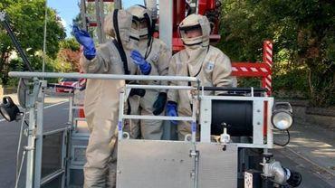 Les pompiers de Bruxelles exterminent un nid de frelons pour la première fois