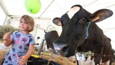 Foire agricole de Libramont: plus de 6.300 visiteurs à la Journée de l'herbe