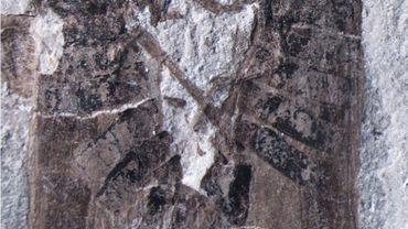 Le fossile de deux insectes en train de s'accoupler découvert en Chine
