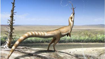 Le Sinosauropteryx avait de multiples sortes de camouflages qui devaient probablement l'aider à éviter d'être dévoré dans un monde rempli de dinosaures carnivores beaucoup plus gros.