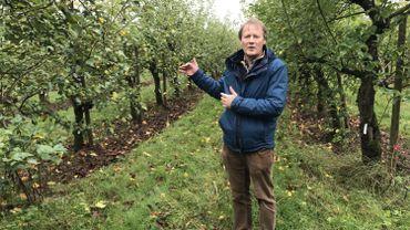 Il n'y a presque pas de pommes dans les vergers du Centre de recherche agronomique de Gembloux cette année.