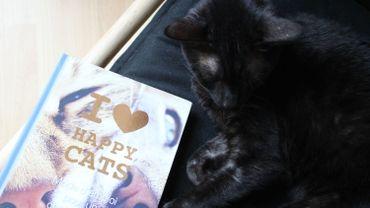 Pour la journée mondiale du chat, découverte d'un guide pour rendre son chat heureux