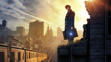 """""""Les Animaux fantastiques"""" sortira sur les écrans belges le 16 novembre 2016"""