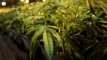 De Block n'a pas l'intention de légaliser l'huile de cannabis
