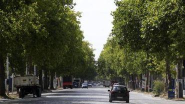 Pour l'instant, les pavés et les platanes resteront bel et bien à l'avenue du Port