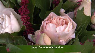 La rose baptisée à la fête des plantes de Celles